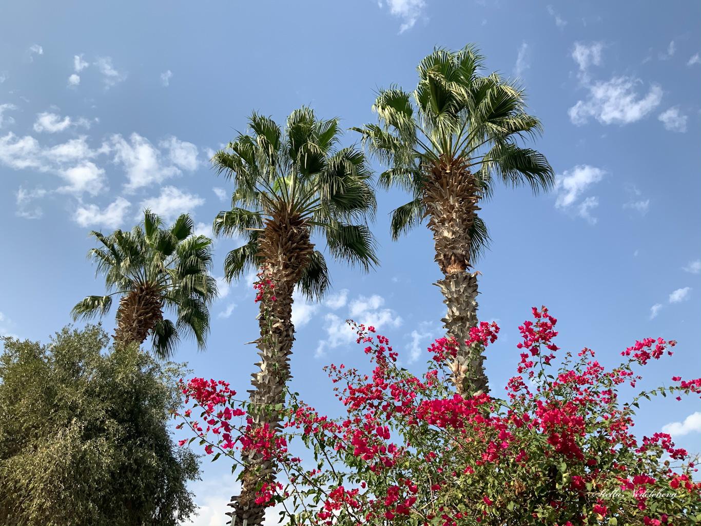 Jardin exotique avec des palmiers