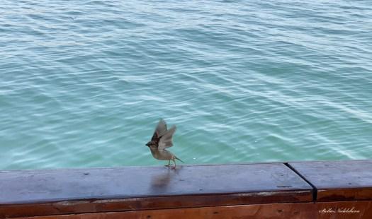 Un moineau prenant son envol vers la mer