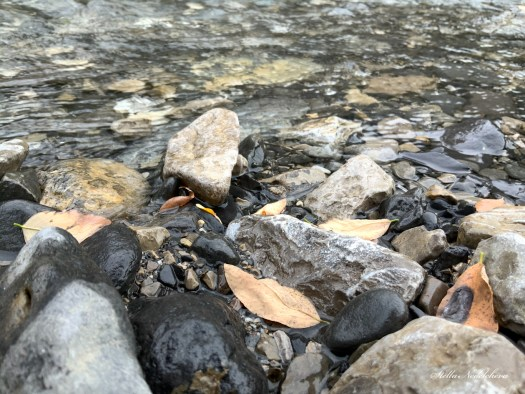 Pierres et feuilles d'automne dans la rivière