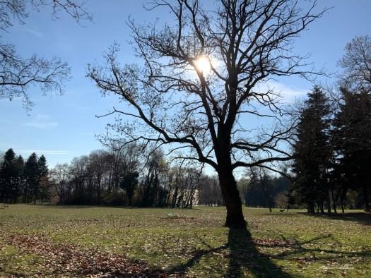 Arbre aux branches nues