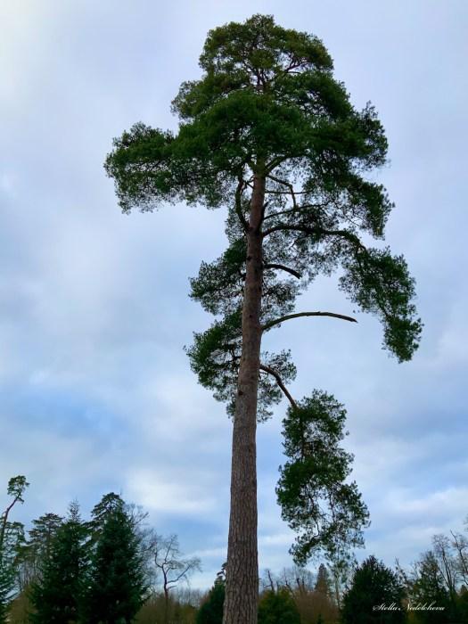 Grand arbre élancé vers le ciel