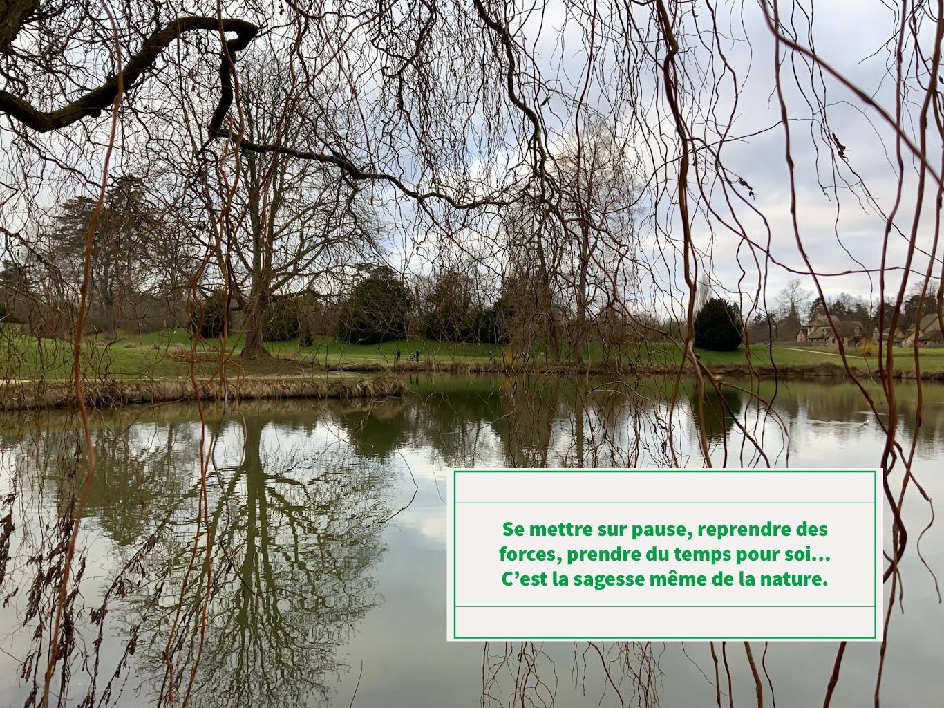 Citation sur un paysage avec des branches d'arbres nus au dessus d'un lac