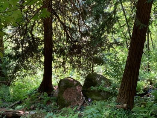 Forêt - Californie