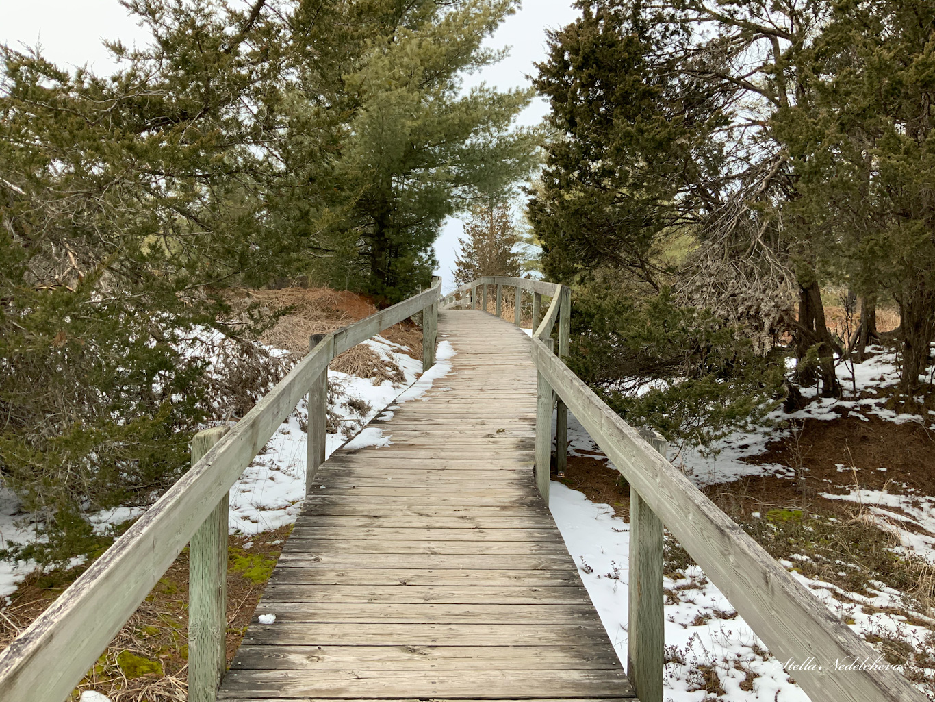 Passerelle en bois dans la forêt canadienne se perdant dans l'horizon