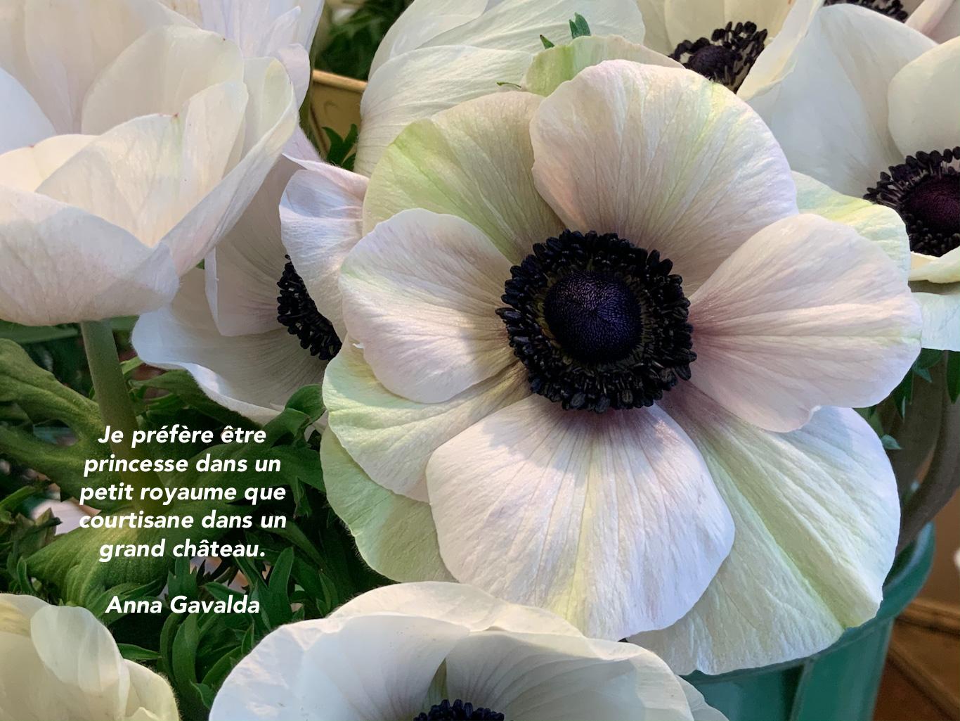 Citation sur un fond de grandes fleurs blanches