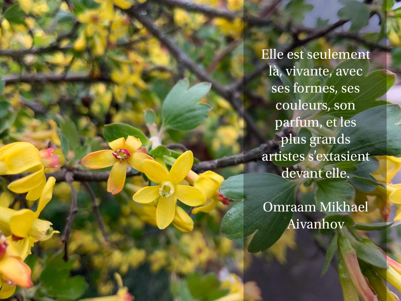 Citation sur les fleurs