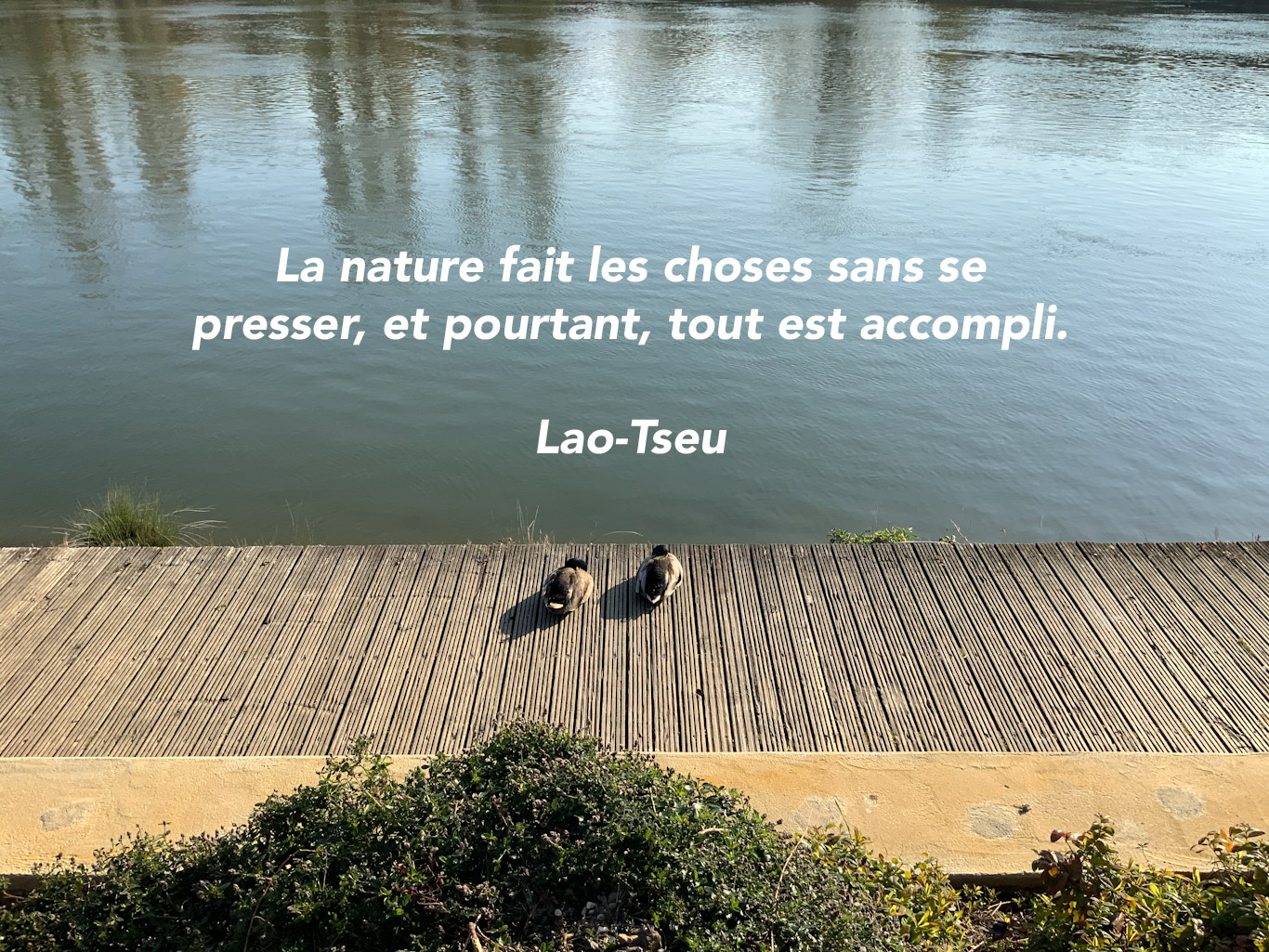 Citation - nature