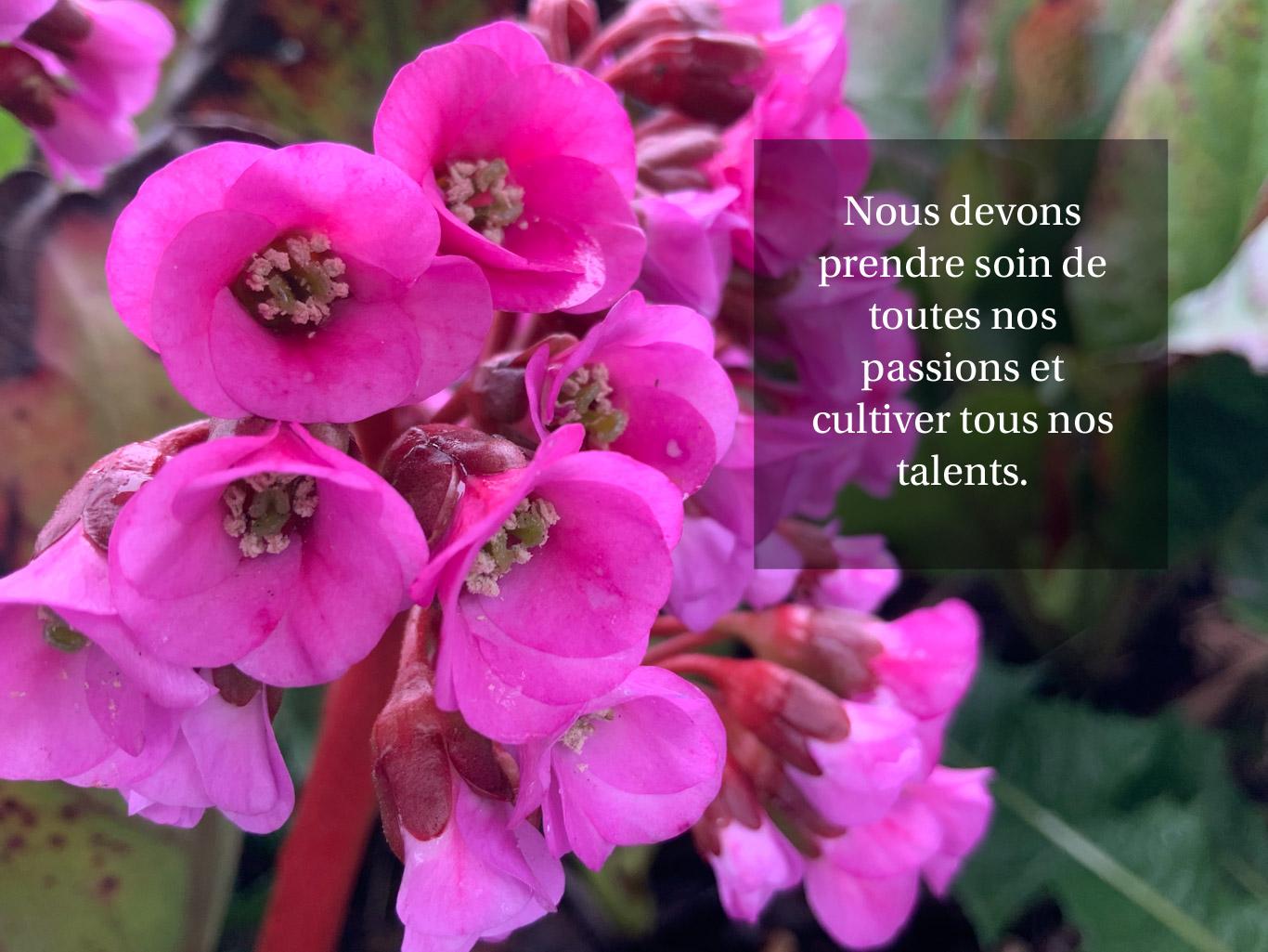 Citation - cultiver nos passions et nos talents