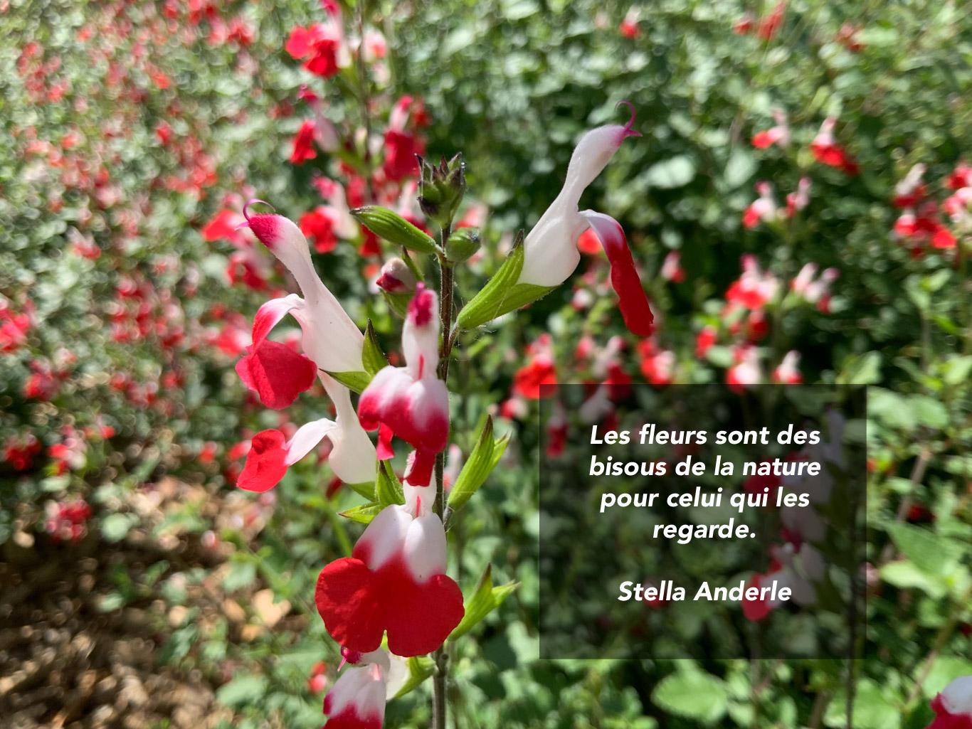 Citation - fleurs, bisous de la nature