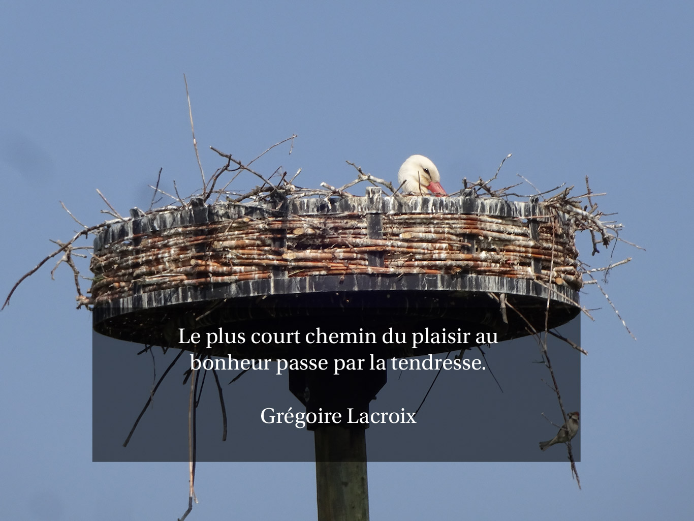 Citation - le plus court chemin