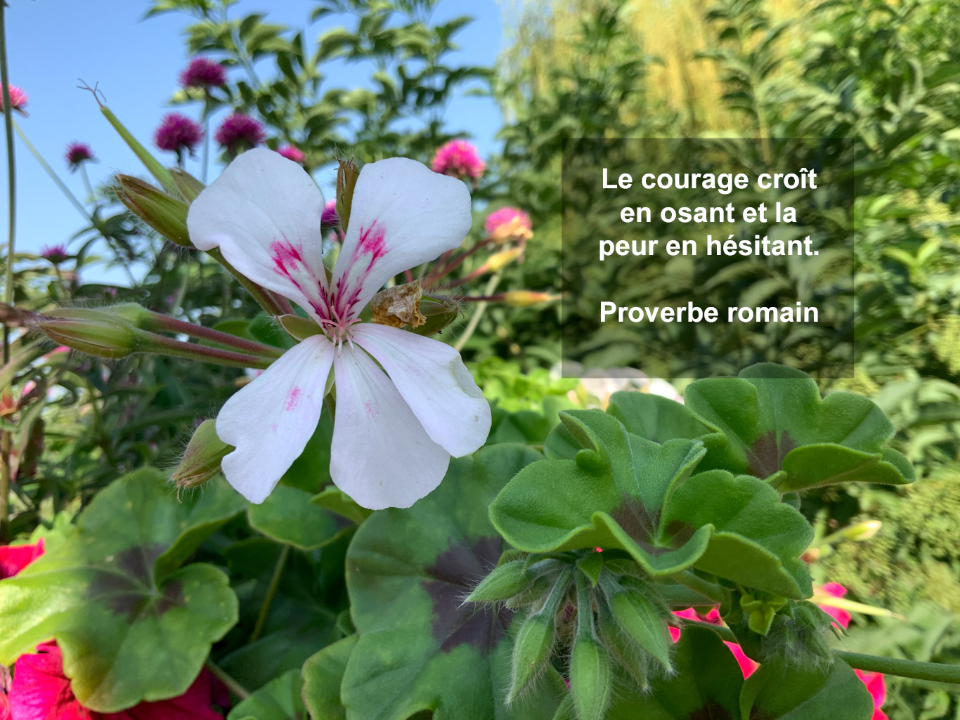 Citation : peur et courage