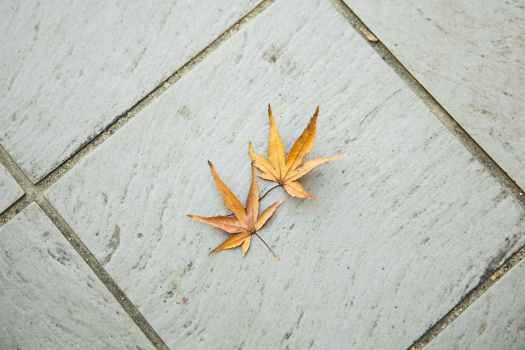 autumn leaves on tiled surface