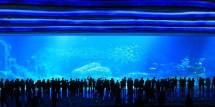 Chimelong Ocean Kingdom World' Largest Aquarium Opens