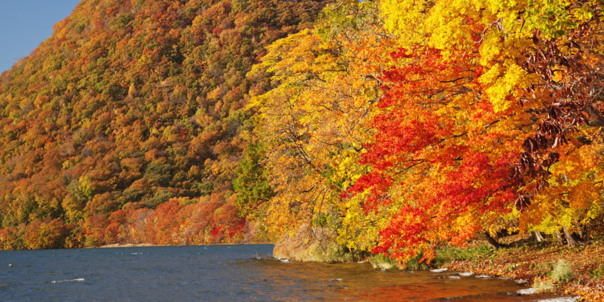 Orange Fall Wallpaper Why This Island In Japan Is The Best Place To See The