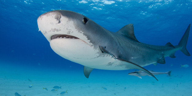 Discovery Channel Hd Wallpapers The Pros And Cons Of Shark Week If You Re A Shark