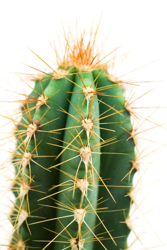 Ces Plantes Dintrieur Robustes Que Vous Pouvez Offrir
