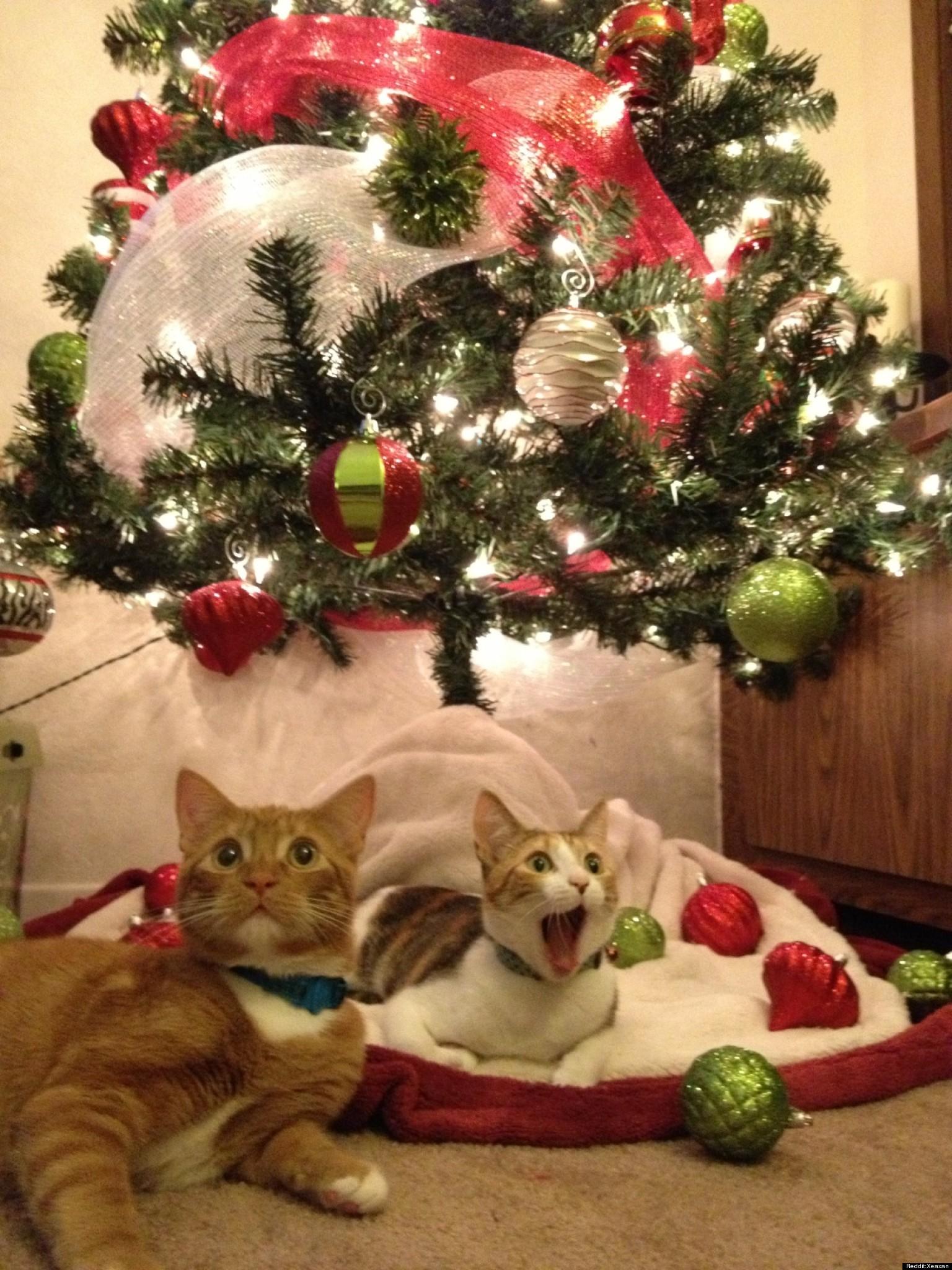 Cats See Santa PHOTO HuffPost