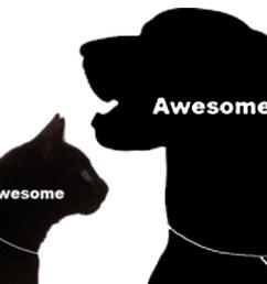 cat pet diagram [ 1536 x 1117 Pixel ]