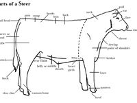 17 Best images about Livestock judging for dummies on