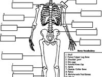 1000+ images about Human body 5th grade on Pinterest