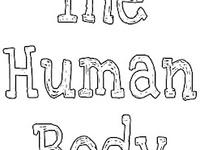 70 best THEME ~ Human Body images on Pinterest