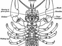 17 Best images about Foss Science Crayfish on Pinterest