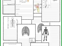 73 best Anatomy science olympiad images on Pinterest