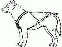 14 best images about dog sledding on Pinterest
