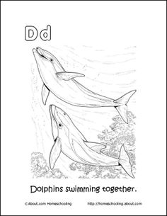 Dolphin Wordsearch, Vocabulary, Crossword, and More