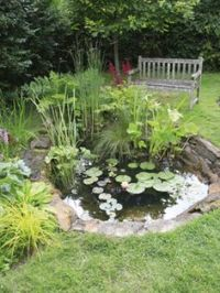 1000+ images about Small Pond Scapes on Pinterest | Garden ...