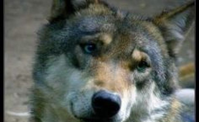 1000 Images About Cherokee People Woo Hooo On Pinterest