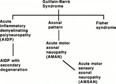 Guillain-Barre syndrome (GBS) is a post infective