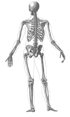 1000+ images about Skeletal System on Pinterest