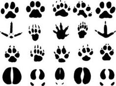 1000+ images about Cub Scouts Animal Tracks on Pinterest