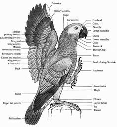 Bird Topography (Kenn Kaufman Field Guide to Birds of