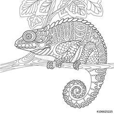 Zentangle lizard coloring page, animal zentangle colouring