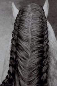 1000+ images about Braiding your horses mane and/ or tail ...