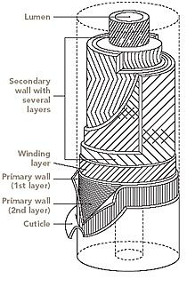 Online Clothing Study: Microscopic view of the natural and