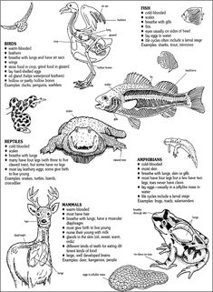 Animal Classification cut and paste: Sort mammals, fish