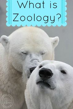 Zoo Activities For Kids On Pinterest Zoo Animals Zoos