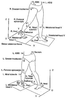 Human Walk Cycle Reference Creating double support phases
