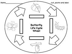 Here's a template for creating a butterfly life cycle