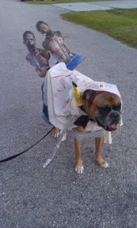 "Michonne ""The Walking Dead"" Dog Costume 