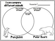 Polar Bears Reading Comprehension Passage from Lakeshore