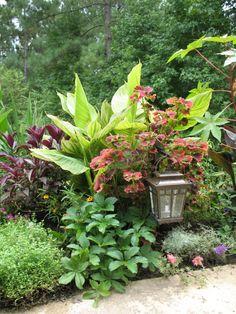 Using Color To Create A Tropical Garden Gardens Orange Flowers
