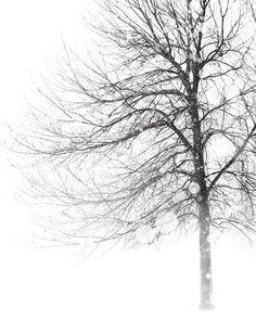 Winter Landscape, Birch Trees, Bird, Red Cardinal