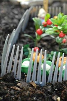 Forks buried in the ground to protect from pests. Garden hack,