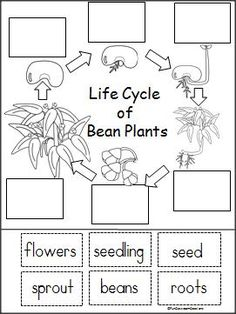 Life cycles, Products and Activities on Pinterest