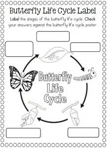 shows the life cycle of the grasshopper whichdevelops in