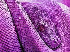 Cute Baby Lizards Wallpaper S N A K E S On Pinterest Viper Corn Snake And Snakes